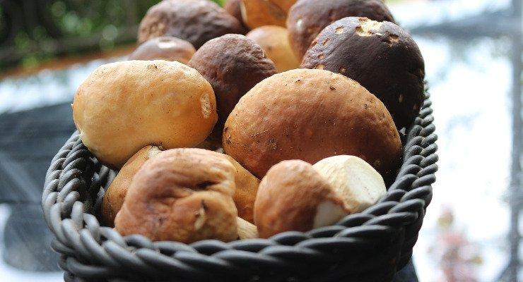 risotto ai funghi porchini mantecato